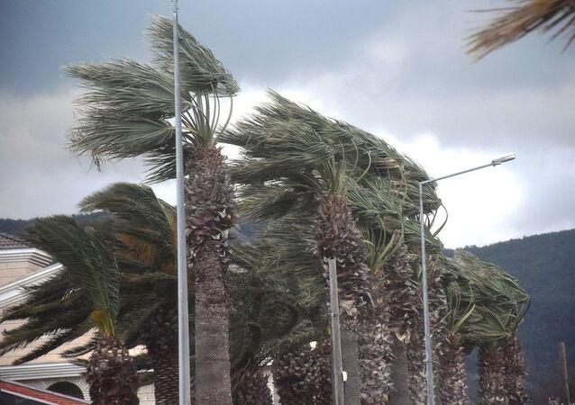 Urla'da fırtına, palmiye ağaçları, rüzgar