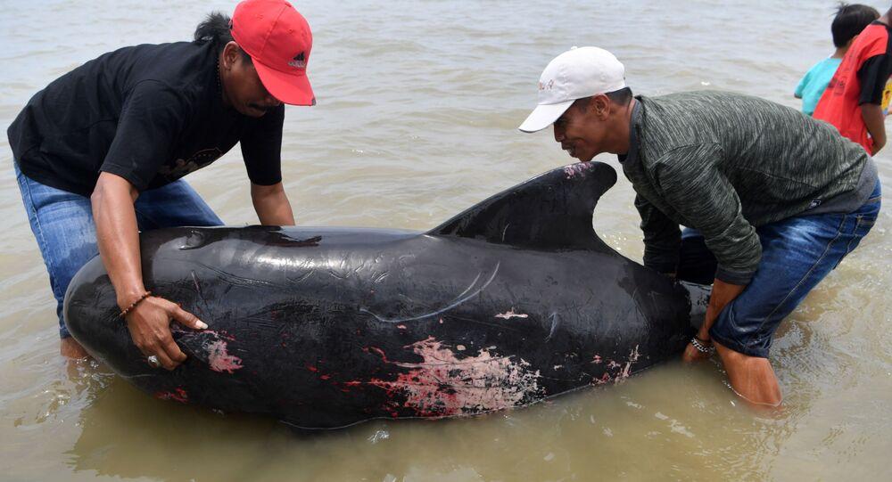 Endonezya'da 46 pilot balina kıyıya vurdu