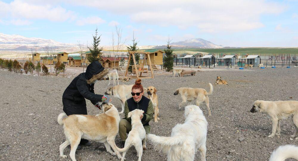 Patipark Hayvanseverler Derneği, 33 dönümlük hayvan barınağı kurdu