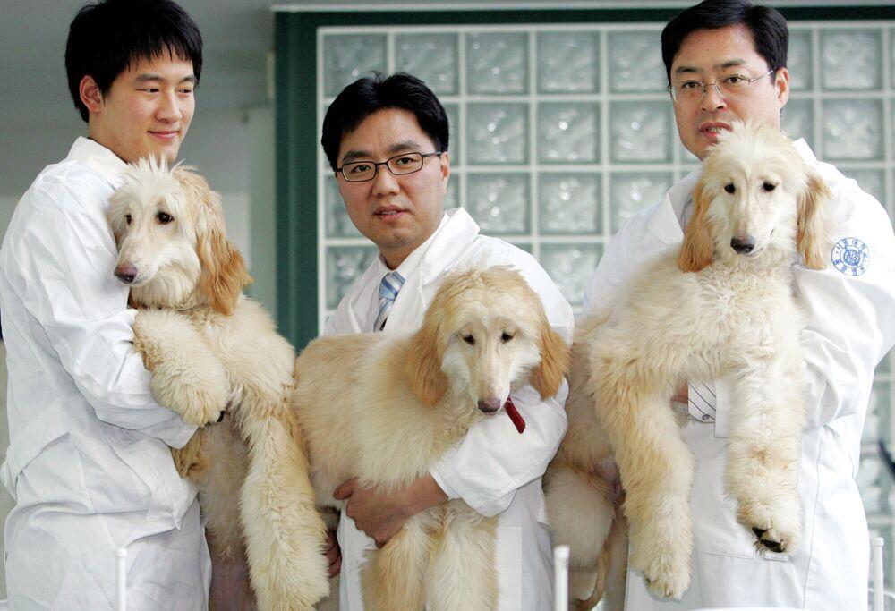 Güney Koreli bilim insanları klonlanmış köpekleri gösterirken