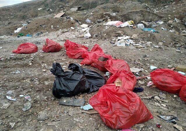 Ankara'da 20 köpek ölü bulundu