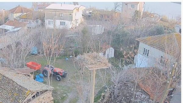 Yaren isimli leyleğin dönüşü - Sputnik Türkiye