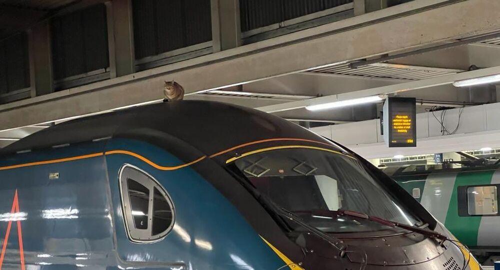 Londra - Hızlı tren üzerindeki kedi