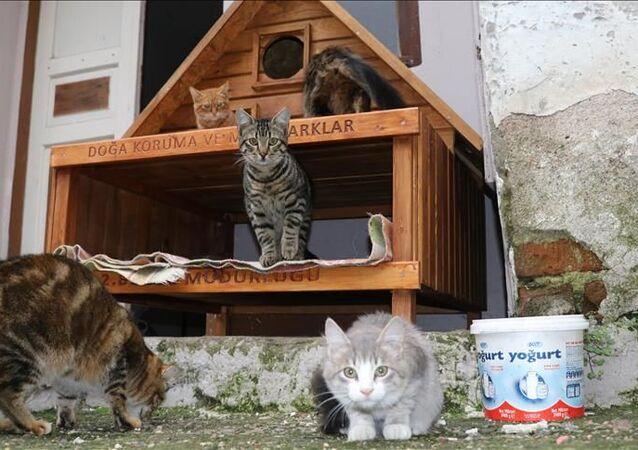 Çanakkale, kedi köyü