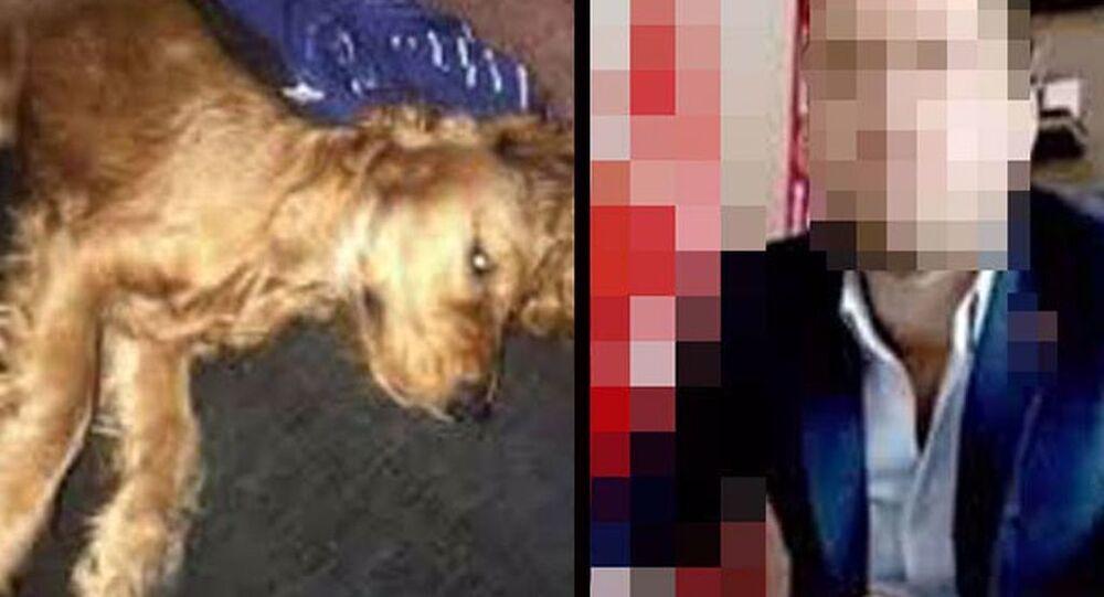 Köpeğe cinsel istismar iddiasıyla gözaltına alınıp, serbest bırakıldı: 3 yıla kadar hapsi isteniyor