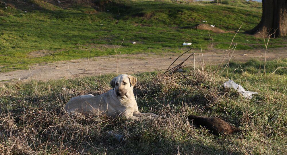 Edirne'de yakılarak öldürülen yavru köpekler