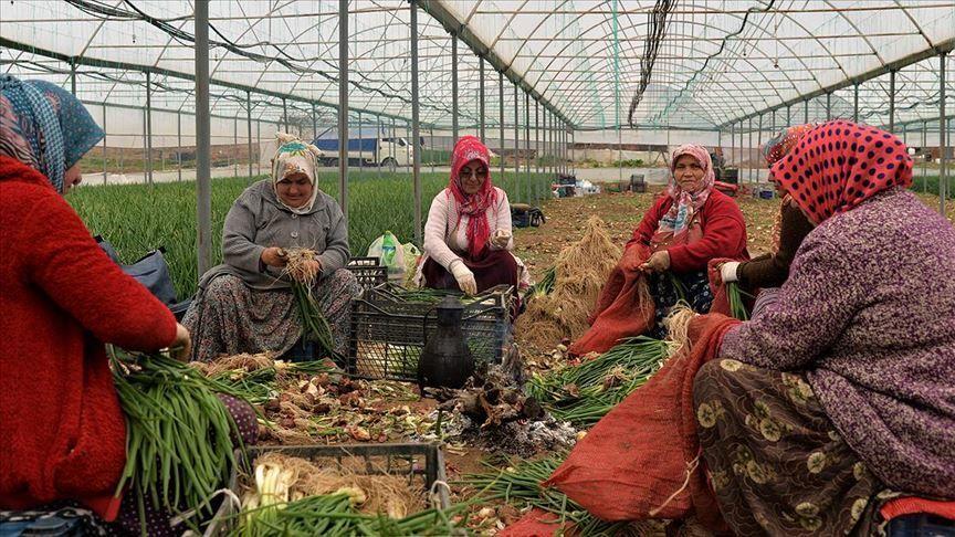 Kadın çiftçi