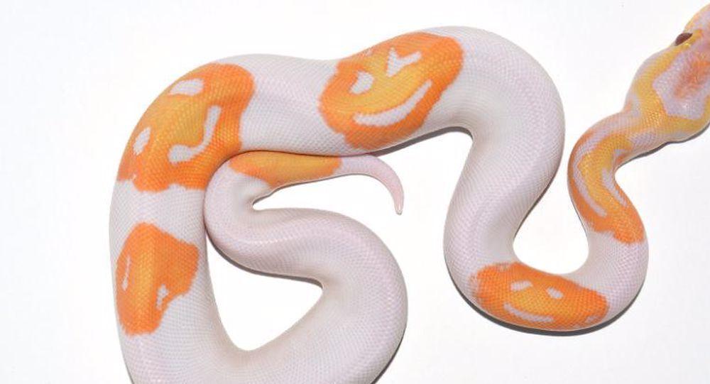 gülen yüz emojili yılan