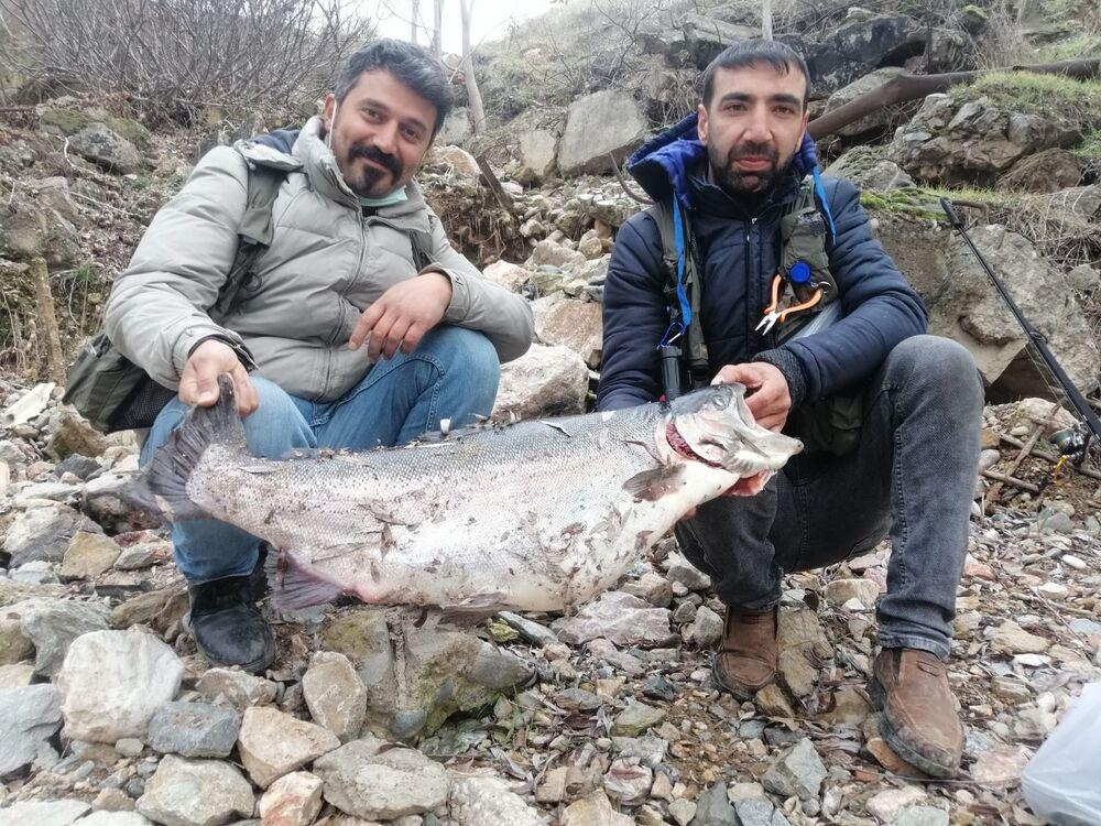 """Arkadaşlarıyla birlikte hobi olarak sportif olta balıkçılığı yaptığını belirten Fatih Yayar, """"Keban ilçesi Fırat Nehri'ne ekip halinde gittik. Ava başladık. Başladıktan 1 saat sonraydı. Gördüğümüz balığı aslında beklemiyorduk. Çünkü o bölgede çıkabilecek en büyük balık olarak beklentilerimiz 5-6 kilo civarındaydı. Yarım saat uğraş sonucunda çıkarabildik"""" dedi."""