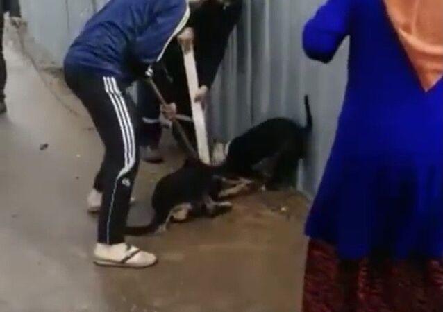 Sultanbeyli, pitbull, sokak köpeğine saldırı
