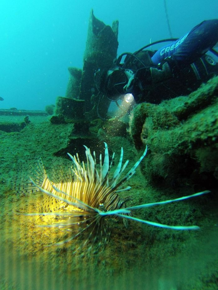 Şu an görülen 'başıboş denizanası' türünün Kızıldeniz'den Akdeniz'e geçen büyük denizanaları olduğunu sözlerine ekleyen Prof. Dr. Gökoğlu, Beyaz görünürler ve çok büyükleri de görülebilir. Yarım metre çapında olanları görebiliyoruz. İnsanlar bunları gördüklerinde yaklaşmasın. Denizanalarının dokunduğu yere tatlı su değdirmesinler yine deniz suyu ile yıkasınlar. Tatlı su zehirli baloncukları patlatabilir. Amonyaklı merhemler sürmeliler. Öldürücü etkisi yok. Herhangi bir tehlike yok dedi.