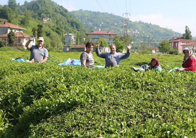 Karadeniz'e 'çay göçü' öncesi kritik 'vaka' uyarısı