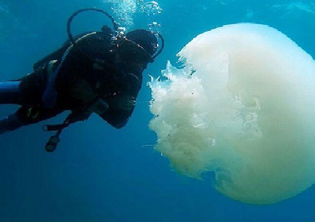 Prof. Dr. Gökoğlu, Turizm sezonuna doğru mayıs ayının başlarında popülasyon azalacak, geçişleri akıntılarla son bulacak. Mart ayı karadan besinin denize ulaştığı çok yoğun bir dönem olduğu için denizanaları kıyılara kadar gelmektedir. Denizanaları şu anda denize girenlere dokunabilir, dokunduğu anda da vücutlarını yakabilir. Öldürücü etkisi yok. Vücudu yaktığı için kızarıklık ve yanık oluşabilir. Kimse korkmasın diye konuştu.
