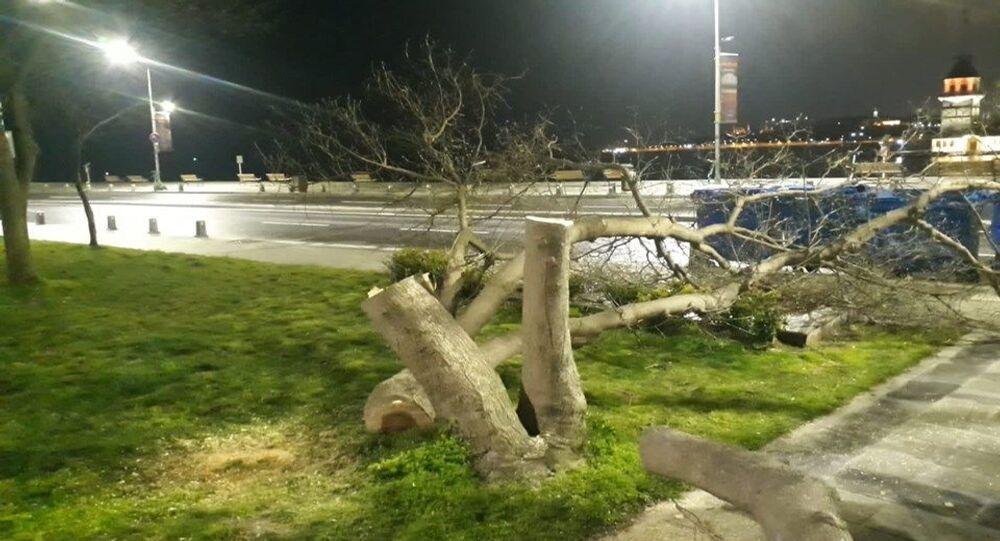Üsküdar sahildeki ağaçların kesilmesi