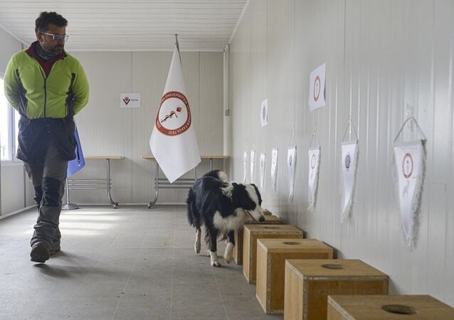 Kovid-19'u teşhis eden dedektör köpek yetiştirildi