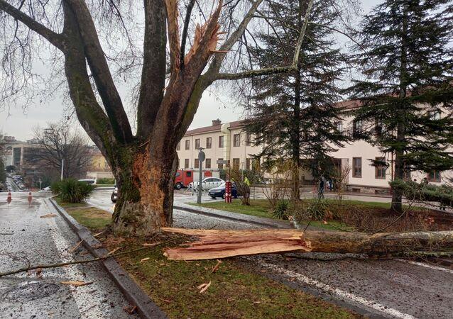 Meclis bahçesindeki bir ağaca yıldırım düştü