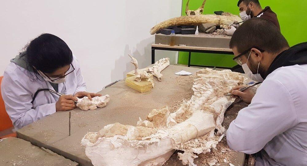 fosil, Kayseri