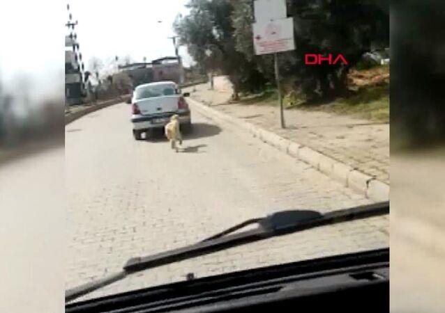 Köpeği aracının arkasına bağlayan sürücü, Aydın