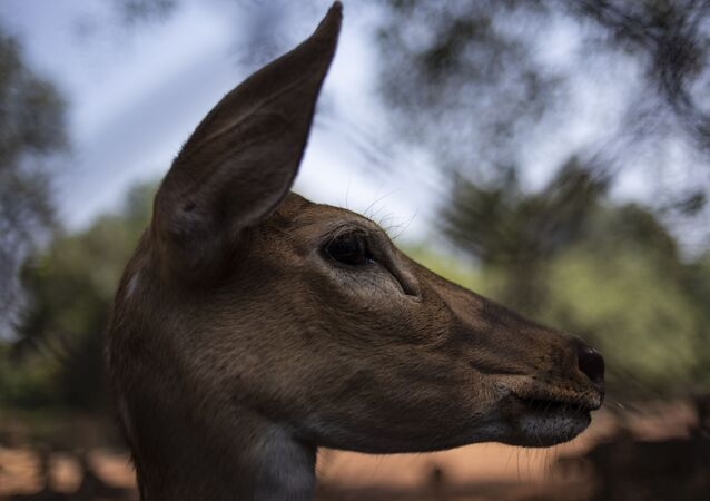 ABD'de huzurevine geyik operasyonu