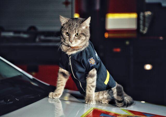 Arthur Morkotenko tarafından donmaktan kurtarılan kedi, Kiev İtfaiyesi tarafından sahiplenildi.