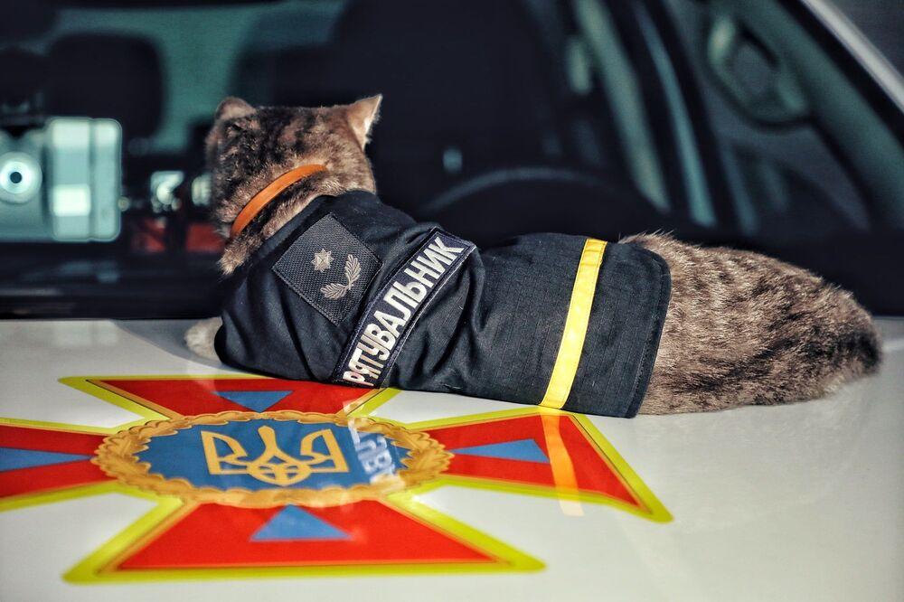 Chivas adı verilen kediye, binbaşı rütbesi de verildi.