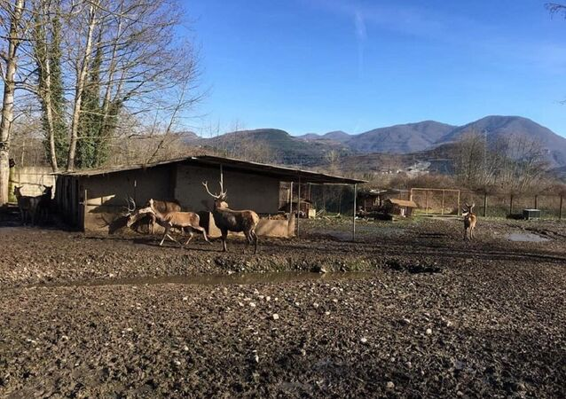 Geyik- Zonguldak'ın Gökçebey ilçesinde hayvanat bahçesi