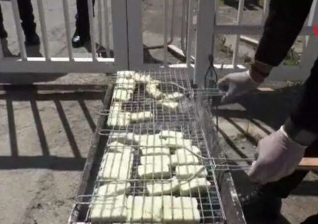 Kuzey Kıbrıs'ta hellim sektöründe faaliyet gösteren üretici, çiftçi, hayvan yetiştiricisi ve imalatçıları, hellimin coğrafi tescili ve Kuzey Kıbrıs'tan Avrupa Birliği ülkelerine ithalini mümkün kılacak önergenin yarın yapılacak oylama öncesi protesto düzenledi.