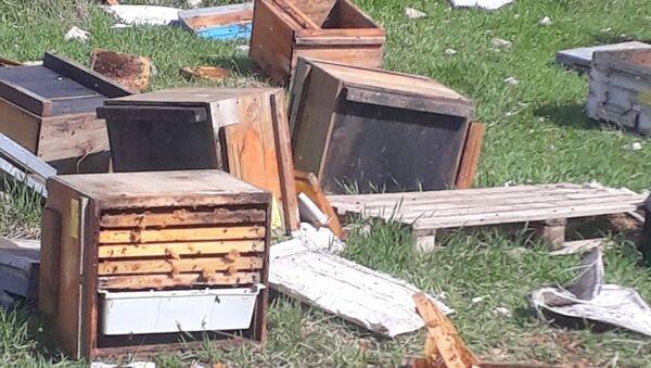 Hakkari'nin Çukurca ilçesinde kış uykusundan uyanan ayılar, 150 arı kovanına zarar verdi. - Sputnik Türkiye