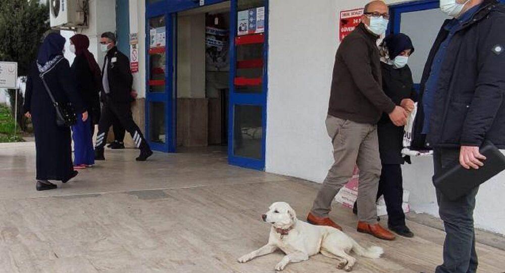 kalp krizi geçiren bir hastanın köpeği 'Pamuk'