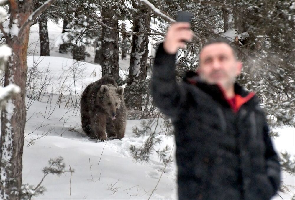 Kars'ın Sarıkamış ilçesinde kış uykusundan uyanan bozayılar, yiyecek aramak için gezinmeye başladı.