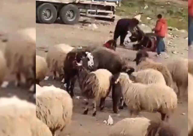 Eşeğini döven çobana 1033 lira para cezası