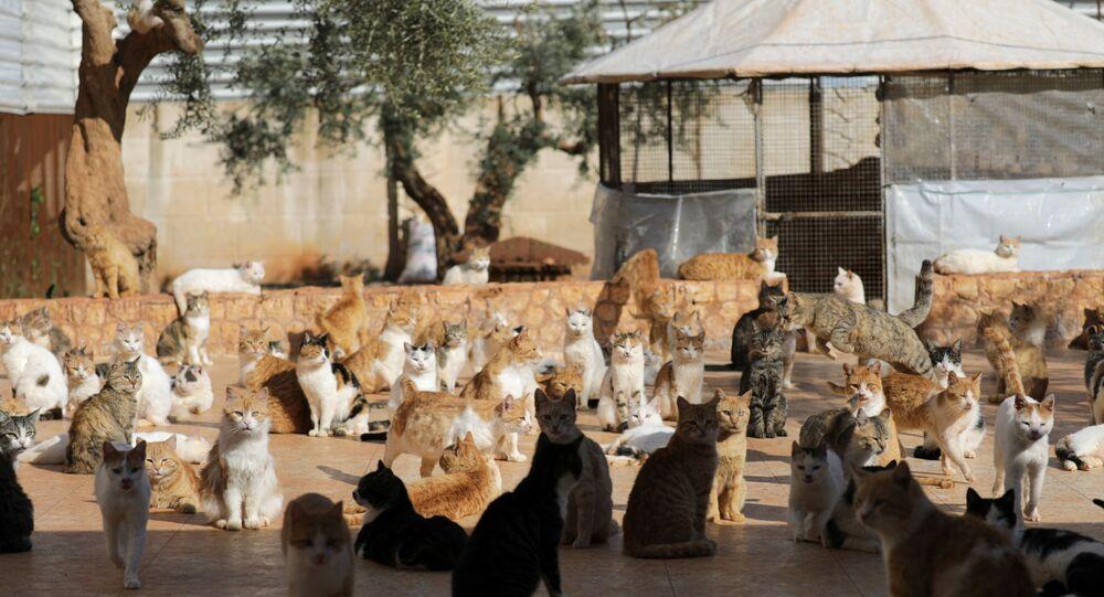 İdlib - hayvan barınağı