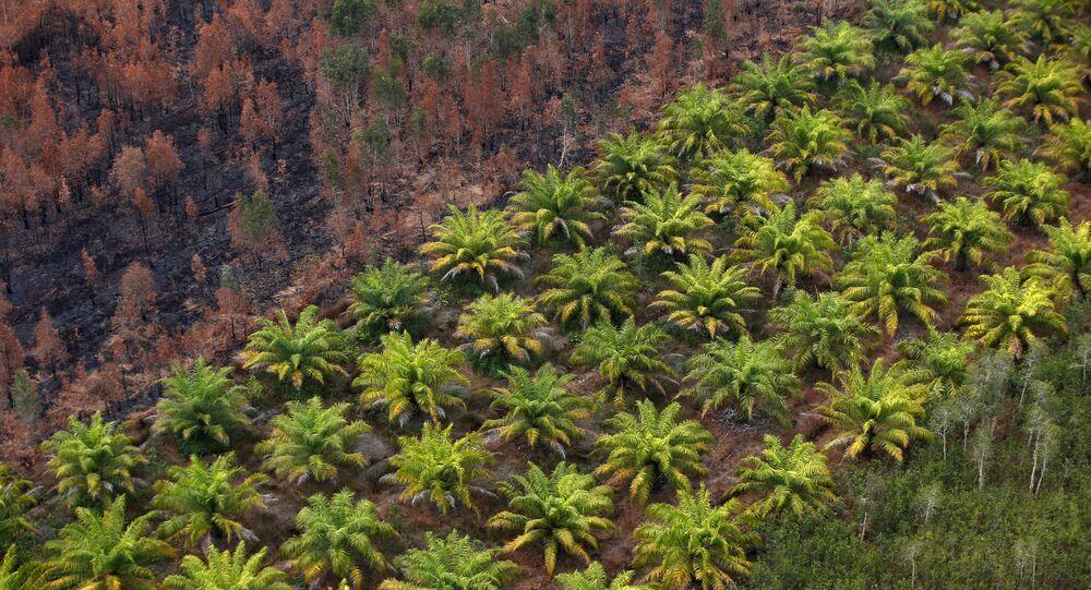 Palmiye çiftliği