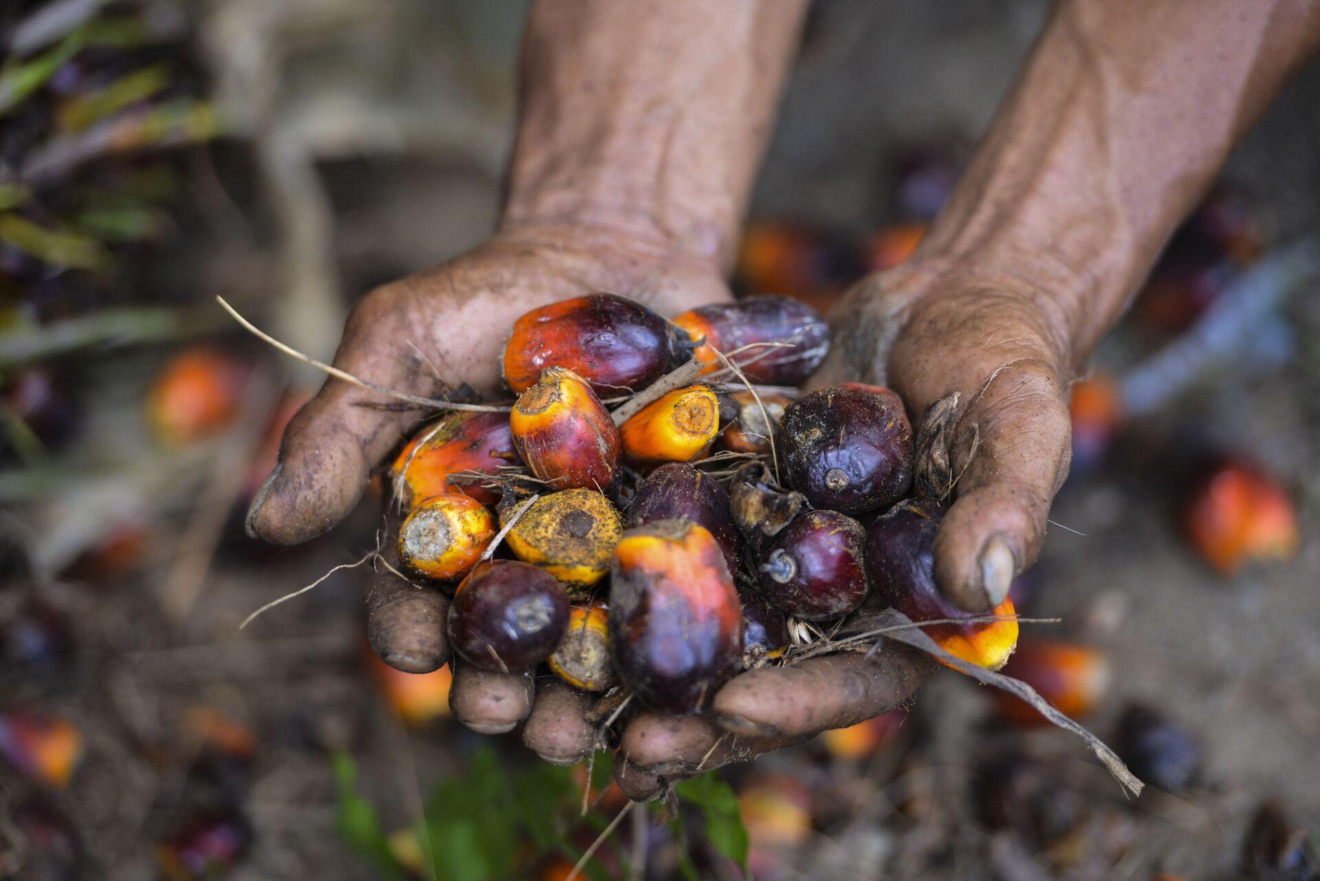 Sri Lanka palmiye yağı ithalatını yasakladı  - Sputnik Türkiye, 1920, 07.04.2021
