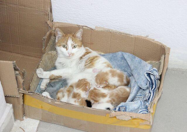 Karaman, hamile kedi, doğum