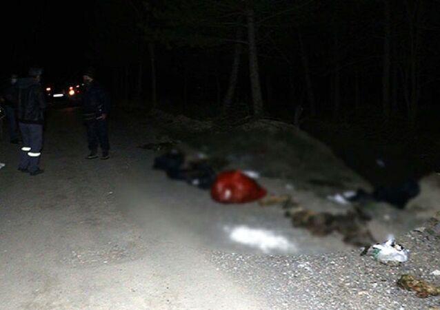 Damar yolu açılmış 30 köpek ölüsü bulundu