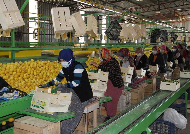 Limon - kadın işçiler