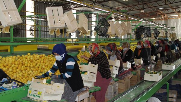 Limon - kadın işçiler - Sputnik Türkiye