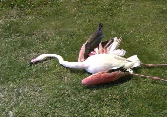 İzmir / flamingo