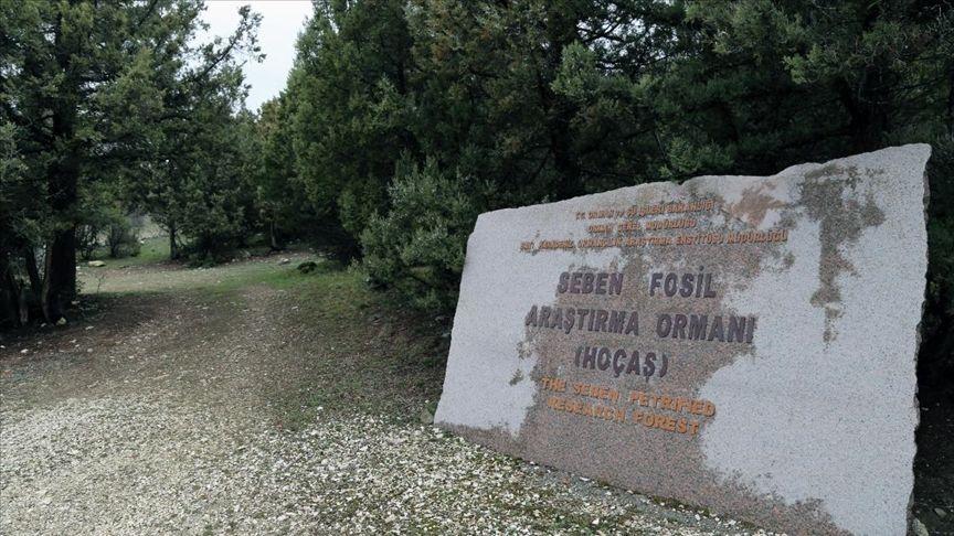 Seben Fosil Ormanı, Hoçaş, Bolu