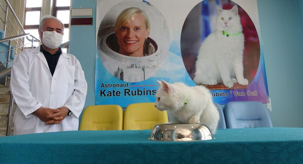 Van Gölü'nün uzaydan fotoğrafını çeken Astronot Kate Rubins'e Van kedisi hediyesi