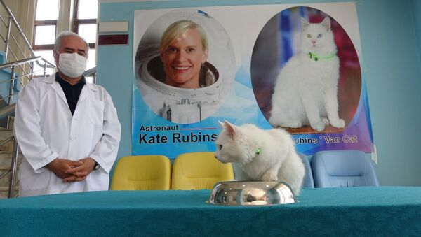 Van Gölü'nün uzaydan fotoğrafını çeken Astronot Kate Rubins'e Van kedisi hediyesi - Sputnik Türkiye