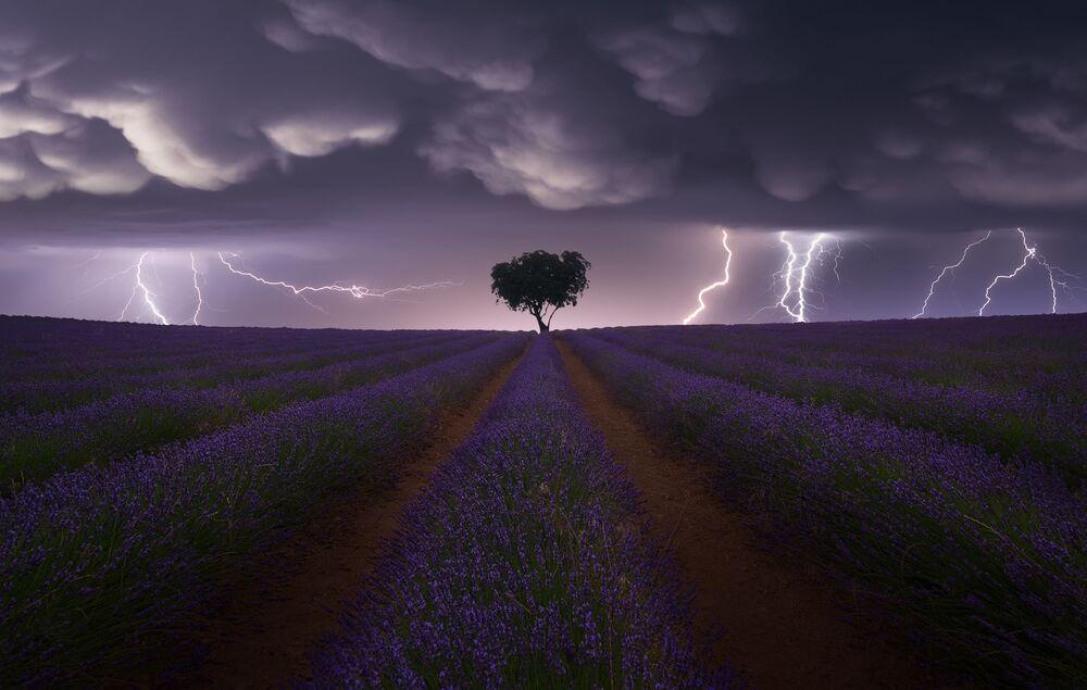Yarışmanın Açık Manzara kategorisinin birincisi İspanyol fotoğrafçı  Juan López Ruiz'in 'Lavanta Tarlasında Elektrik Fırtınası' görüntüsü