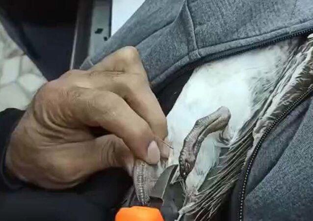 Ayaklarına misina dolanan martı kurtarıldı