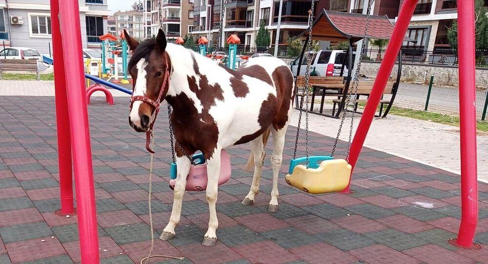 Salıncağa dolanan at