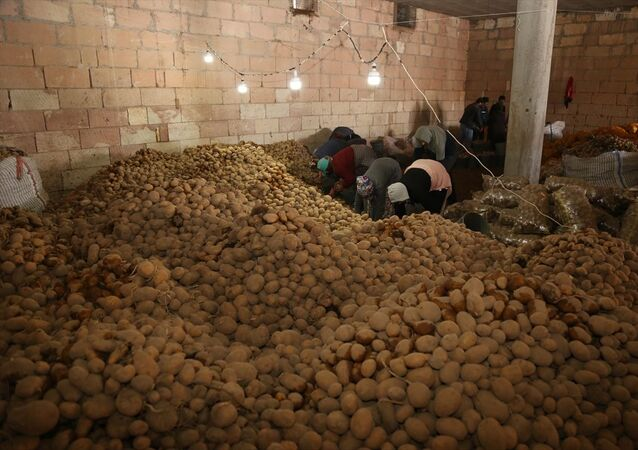 Cumhurbaşkanı Erdoğan'ın talimatıyla harekete geçen Toprak Mahsulleri Ofisi (TMO), üreticinin deposunda kalan tüketim fazlası patatesleri satın alarak ülkenin dört bir tarafına sevk ediyor. Türkiye'nin patates ambarı konumundaki Nevşehir'de, hasat döneminde yüksek rekolte elde edilmesine rağmen tüketimin azalması nedeniyle depoda kalan ürün, çiftçinin mağduriyet yaşamaması amacıyla TMO tarafından satın alınarak ihtiyaç sahibi vatandaşların sofralarına ulaştırılıyor.