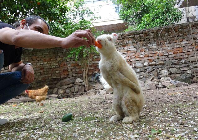 denek tavşanı Zulu, 269 Vegan Atölyesi, Aydın