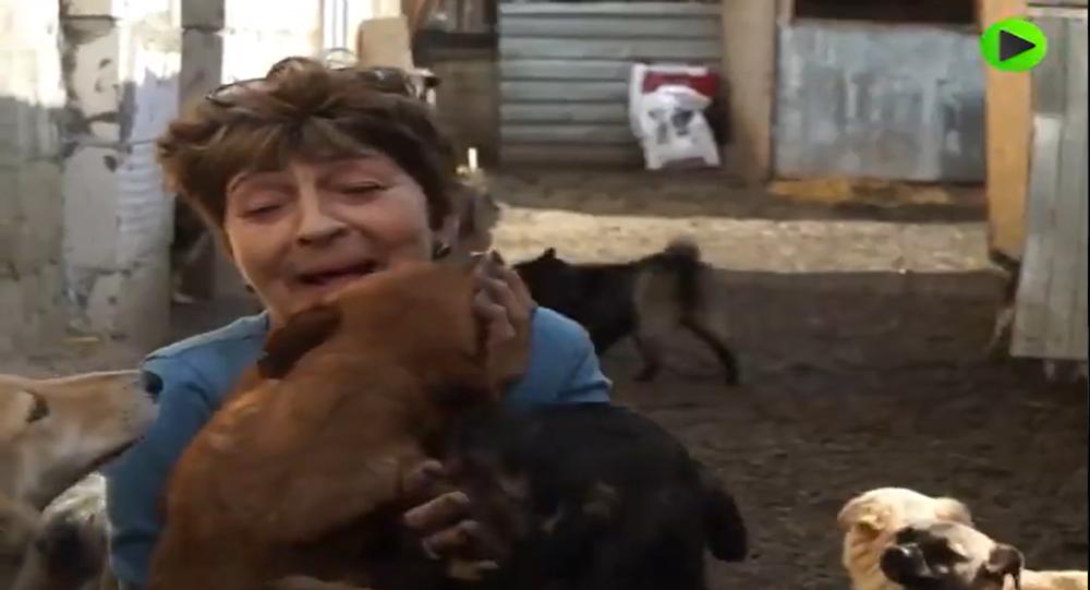 Rusya / hayvansever / köpek