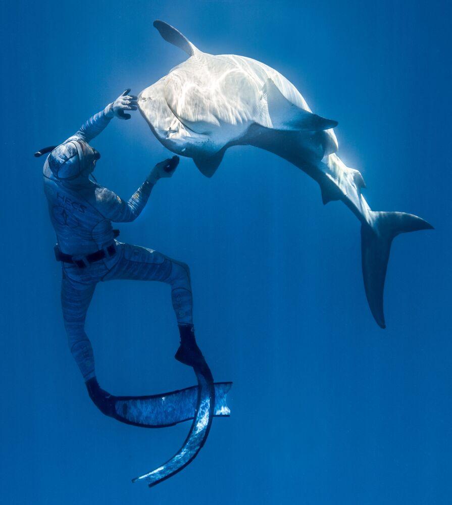 Fransız Polinezyası açıklarında köpekbalığı ile etkileşim içinde bulunan Fransız dalgıç Pierrick Seybald