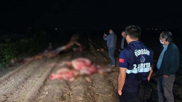 Adana'da, tarlada kesilmiş 3 at bulundu - Sputnik Türkiye